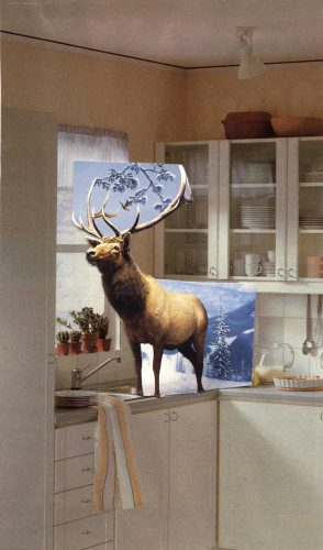 Bedazzled Stag collage and poem